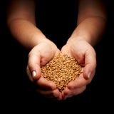 Cereales Fotografía de archivo