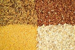 Cereales Foto de archivo libre de regalías