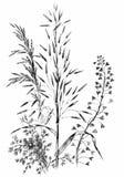 Cereales salvajes dibujados mano Imágenes de archivo libres de regalías