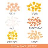 Cereales y grano, avena, arroz, maíz, guisantes partidos, trigo, alforfón Ilustración del vector Foto de archivo