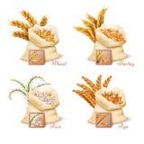 Cereali agricoli - insieme di vettore del grano, dell'orzo, dell'avena e del riso illustrazione vettoriale