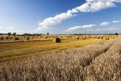 Cereali di agricoltura Estate Immagine Stock Libera da Diritti
