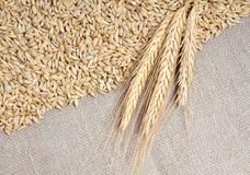 Cereali sulla priorità bassa della tela da imballaggio Immagini Stock Libere da Diritti