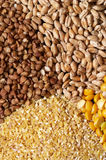 Cereals. Four sorts of cereals on the black plate macro shot background stock photo