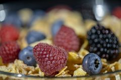 Cereals with assorted berries, extreme close up shot Royalty Free Stock Image