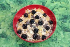 Cereals with blackberries. Some cereals with blackberries and chocolate Stock Photography