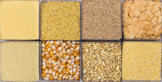 Cereals. Eight yellow cereals grain and seeds Royalty Free Stock Photos