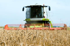 Cereals field and combine at Royalty Free Stock Photo
