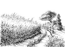 Cereals field drawing. Wheat field on the side of the road drawing royalty free illustration