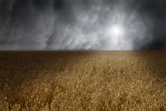 Cereals field Royalty Free Stock Images