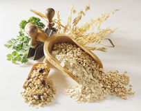 Cereals and fresh herbs. Still life with cereals and fresh herbs stock photography