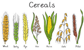Cereals hand-drawn illustration stock images