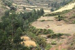 Cereals harvest in Ethiopia Stock Image