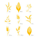 Cereals icon crop barley oats wheat rice maize complex. Cereals, icon, crop, barley, oats, wheat rice maize complex field  grass seed symbol white cereals Stock Image
