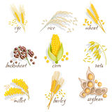 Cereals Icon Set. With rye rice wheat corn oats millet soybean ear of grain vector illustration Royalty Free Stock Photos
