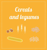 Cereals and legumes. Illustrations of grain and vegetables. Vectors Stock Photos