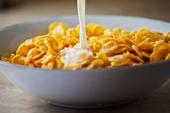 Cereals with milk Stock Photography