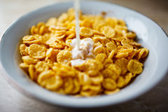 Cereals in  plate Stock Photo