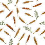 Cereals seamless pattern. Barley, rye, oats, rice and wheat Royalty Free Stock Photography