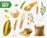 Cereals Transparent Icon Set. Colored realistic and isolated cereals transparent icon set with steps of production vector illustration Stock Photography
