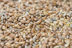 Cereals (for use as background image or as texture) Royalty Free Stock Photo