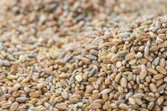 Cereals (for use as background image or as texture) Royalty Free Stock Photos