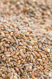 Cereals (for use as background image or as texture) Royalty Free Stock Image