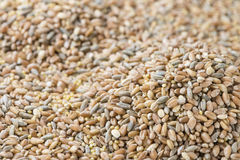 Cereals (for use as background image or as texture) Stock Photos