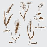 Cereals vector illustration Royalty Free Stock Images