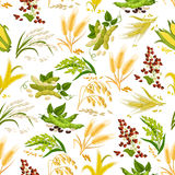 Cereals vector seamless pattern of grain Stock Photo