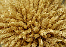Cereals - wheat Royalty Free Stock Photography