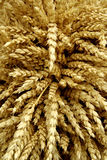 Cereals - wheat Stock Photos