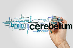 Cerebellum word cloud concept on grey background Royalty Free Stock Images