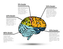 Cerebraci infographic odosobniony Obrazy Stock