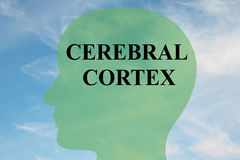 Cerebral Cortex concept. Render illustration of CEREBRAL CORTEX script on head silhouette, with cloudy sky as a background royalty free illustration