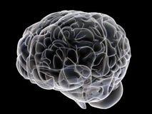 Cerebro Foto de archivo