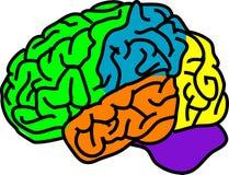 Cerebro Fotografía de archivo libre de regalías