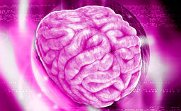 cerebro Fotos de archivo libres de regalías