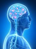 Cerebro activo ilustración del vector
