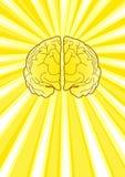 Cerebro brillante Imagen de archivo libre de regalías