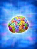 Cerebro colorido creativo Imágenes de archivo libres de regalías