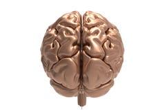 Cerebro con la máscara del recortes Imágenes de archivo libres de regalías