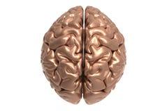 Cerebro con la máscara del recortes Foto de archivo libre de regalías