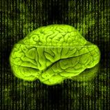 Cerebro de Digitaces Fotografía de archivo