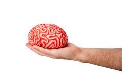 Cerebro de goma humano en una mano Imagen de archivo