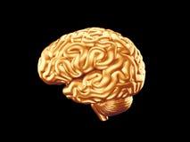 Cerebro de oro Imagen de archivo