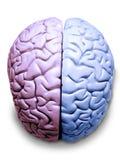 Cerebro derecho e izquierdo Fotos de archivo
