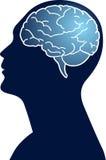 Cerebro humano Fotos de archivo