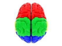 cerebro humano 3d Imagen de archivo libre de regalías
