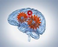 Cerebro humano de cristal con los engranajes dentro Imagen de archivo libre de regalías